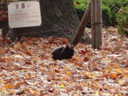 11.19黒猫