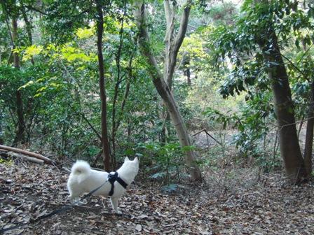12.5太田山公園4