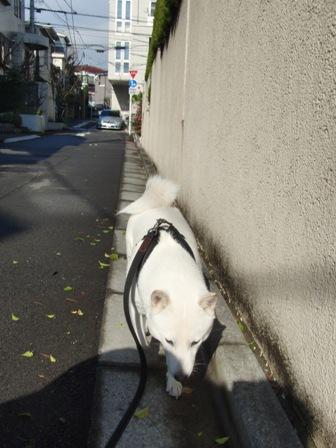 12.22朝の散歩1