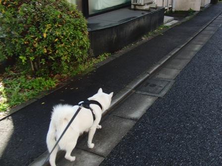 12.22朝の散歩2