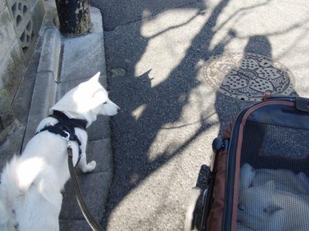 1.22朝の散歩