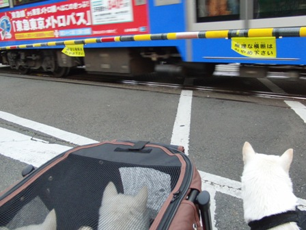 2.6初めて見た電車