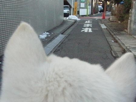 2.16朝の散歩1