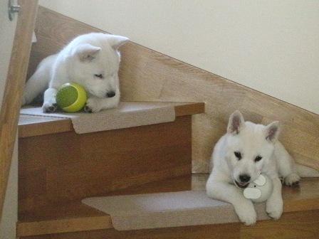 2.23今日も階段でまったりと…