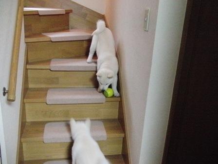 2.28階段で1