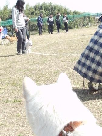 花鈴・比較審査2