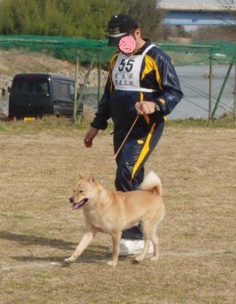 獣猟・牡犬全犬優勝