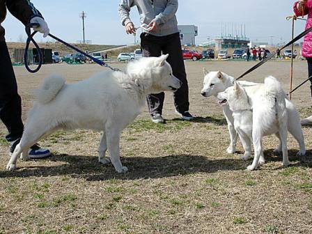 カムイ君(左)と 2