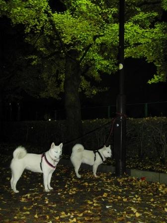 12.3夜の公園