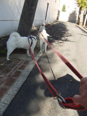 12.11お散歩1