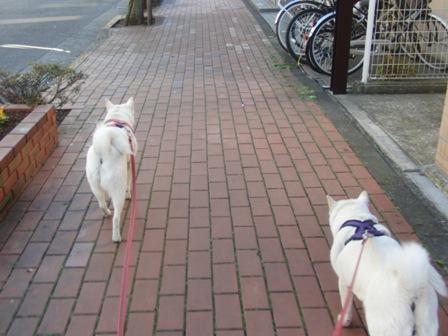 12.11お散歩2