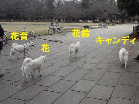 12.14みんなで歩こう!2