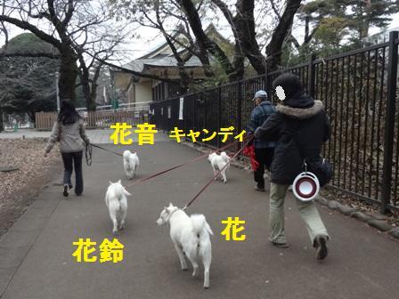 12.14みんなで歩こう!1