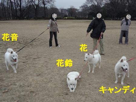 12.14白花一家