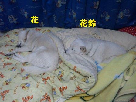 12.16お姉ちゃんのベッド占領