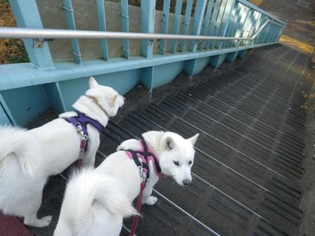 12.19上用賀歩道橋