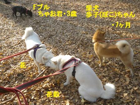 12.21代々木お散歩会2