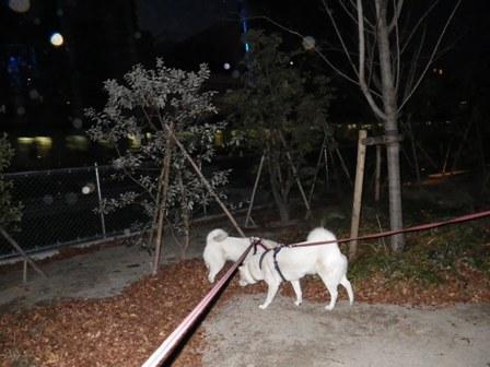 12.24渋谷宮下公園1
