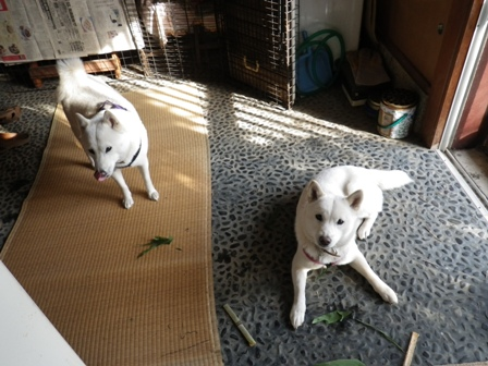 2012.1.1笹の葉