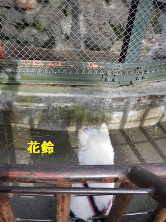 2012.1.1花鈴・サルに夢中