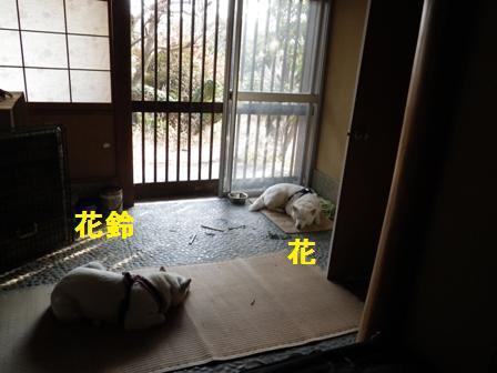 2012.1.1やっとお昼寝