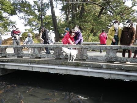 2012.1.1小田原城址公園1