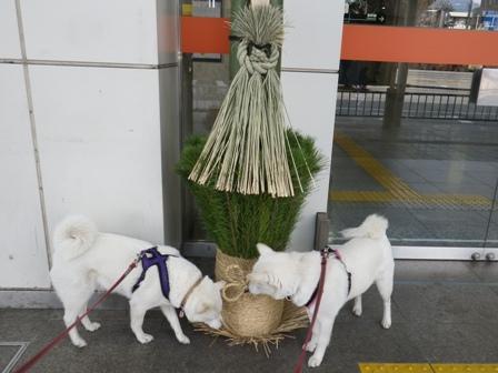 2012.1.1小田原駅の門松