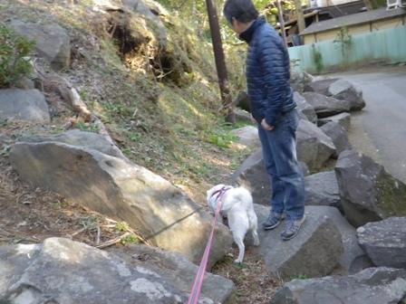 2012.1.3小田原城址公園2
