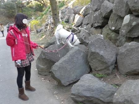 2012.1.3小田原城址公園1