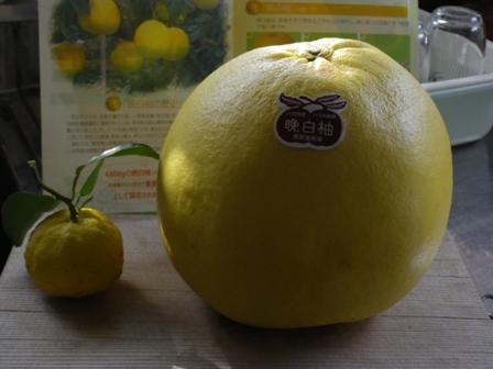 2012.1.3晩白柚(ばんぺいゆ)
