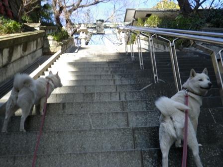 2012.1.8急な階段