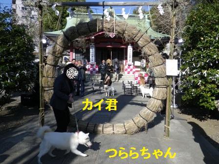 2012.1.8つららちゃん