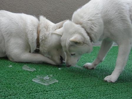 2012.1.12氷で遊んだよ♪1