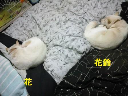 2012.1.17定位置で寝る母娘