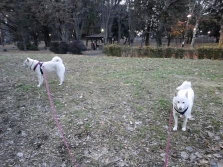 2012.1.18芦花公園4
