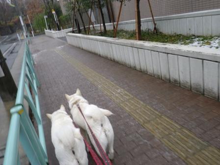 2012.1.20今日の散歩2