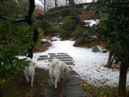 2012.1.20今日の散歩3