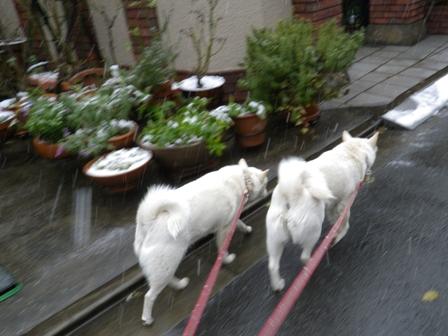 2012.1.20今日の散歩1