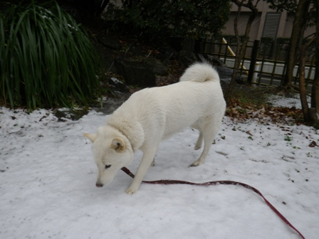 2012.1.20今日の散歩・花