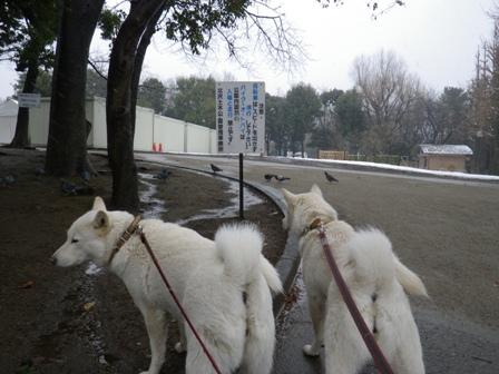 2012.1.20今日の散歩5