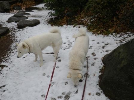 2012.1.20今日の散歩4