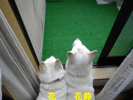 2012.1.21雨降ってるね~