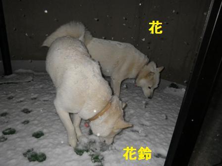 2012.1.23雪だ~2