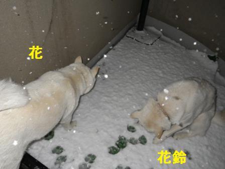 2012.1.23雪だ~1