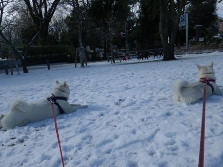 2012.1.24雪が降った翌日6