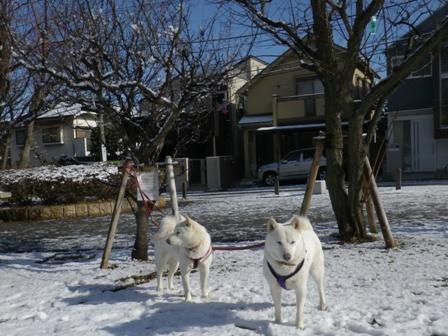 2012.1.24雪が降った翌日5