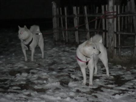 2012.1.24雪が降った翌日9