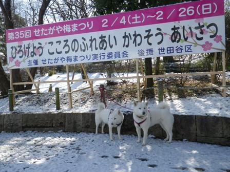 2012.1.24梅まつり・看板
