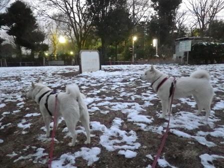 2012.1.24雪が降った翌日8
