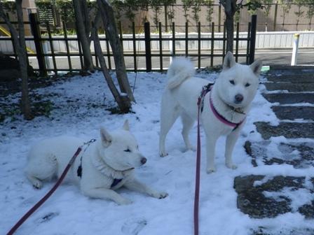 2012.1.25今日の雪3